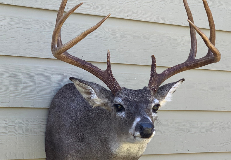 Whitetail Sneak