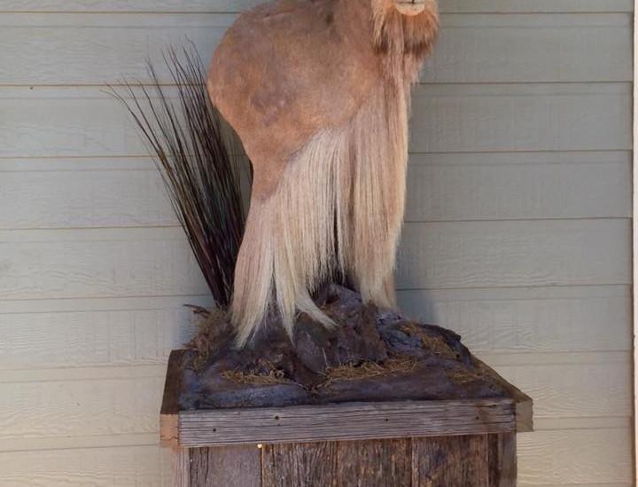 Aoudad Pedestal