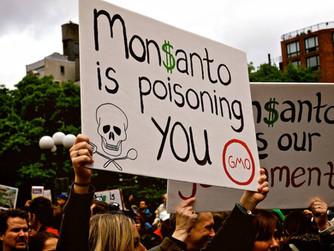 Paolo Barilla e Monsanto Papers