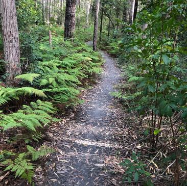 walking through nature Narrawallee.jpg
