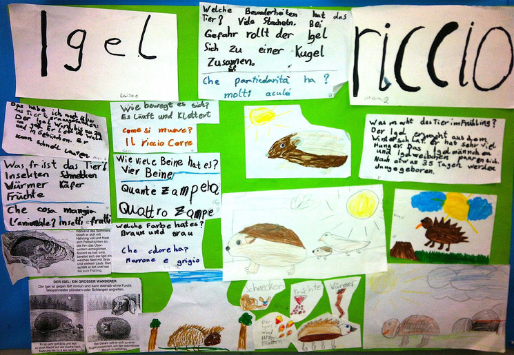 der Igel / il riccio (1. Schuljahr)