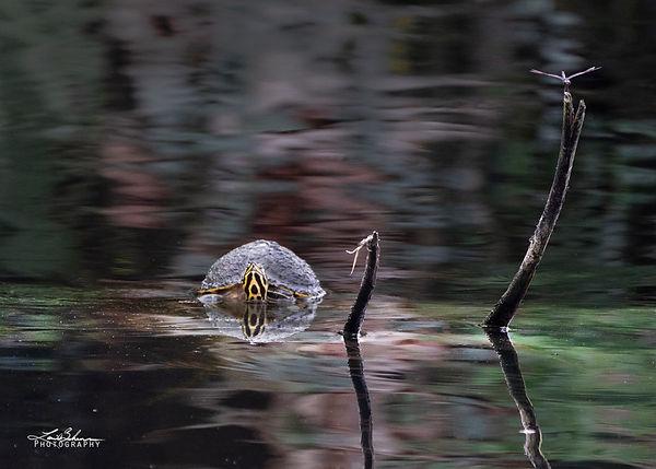 turtleanddragonfly.jpg