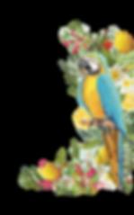 perroquet bleu.png