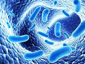 Probiotika.jpg