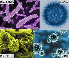 Mikroorganismer i inomhusluften