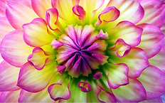 Pink%20flower_edited.png
