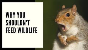 Why You Shouldn't Feed Wildlife