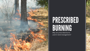 Why are Controlled Burns used in Land Management?