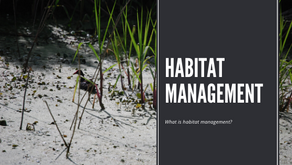 What Is Habitat Management?