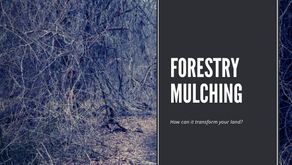 How Forestry Mulching Transforms Property