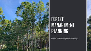 What Is Forest Management Planning?