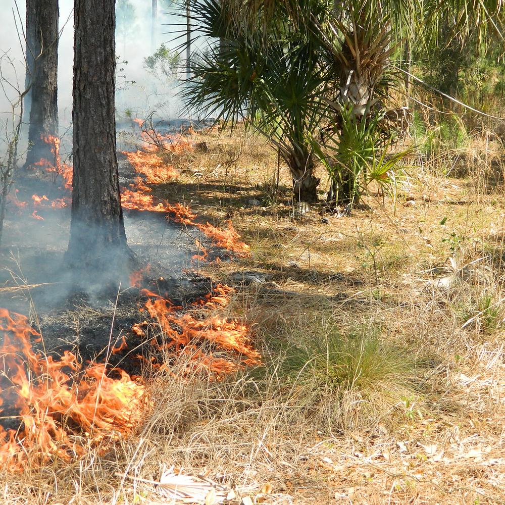 Prescribed burning fire line