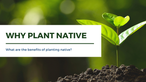 Why Plant Native?