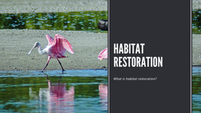 What Is Habitat Restoration?