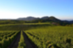 Stagecoach vineyard.jpg