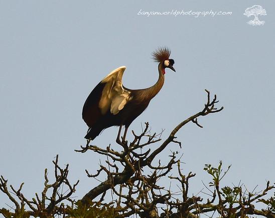 Bird Of the Nile.JPG