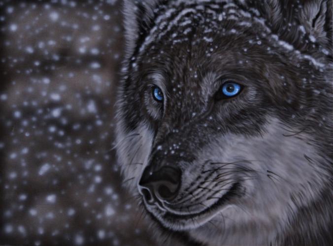 snowy wolf.jpg
