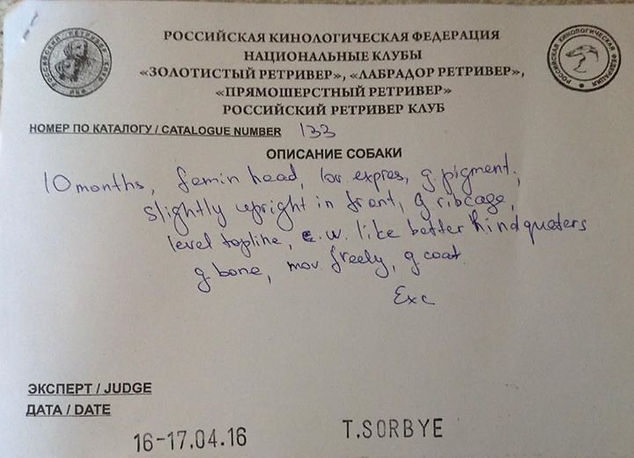 российский ретривер клуб