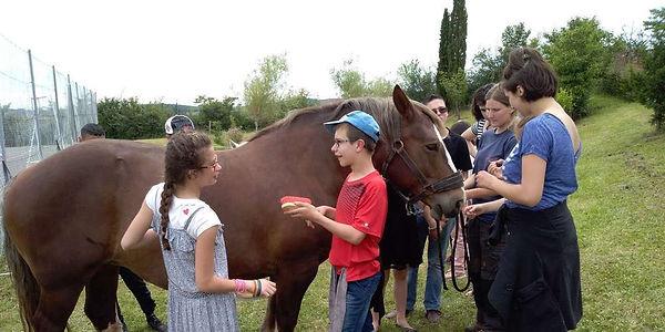Les chevaux du sourire Ferme Itinérante