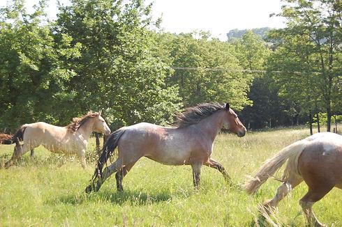 Fanfare Les chevaux du sourire biographi