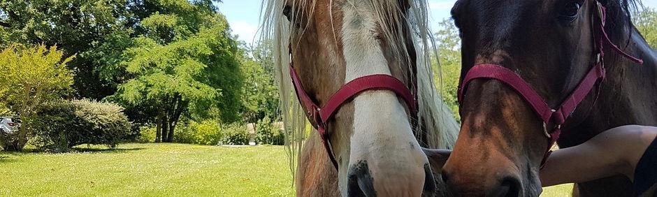 Les chevaux du sourire Médiation Animale