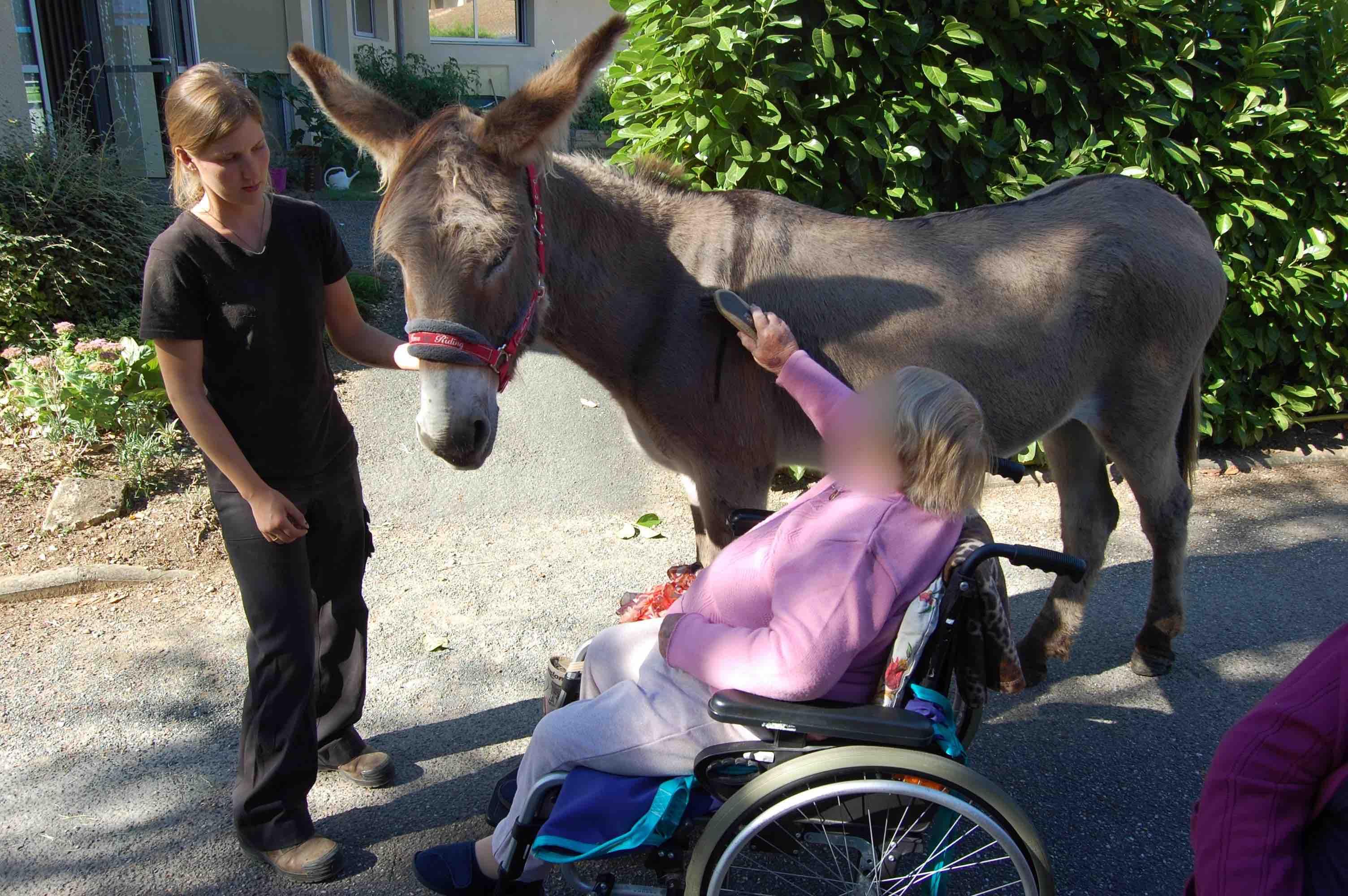 Les_chevaux_du_sourire_médiation_animale