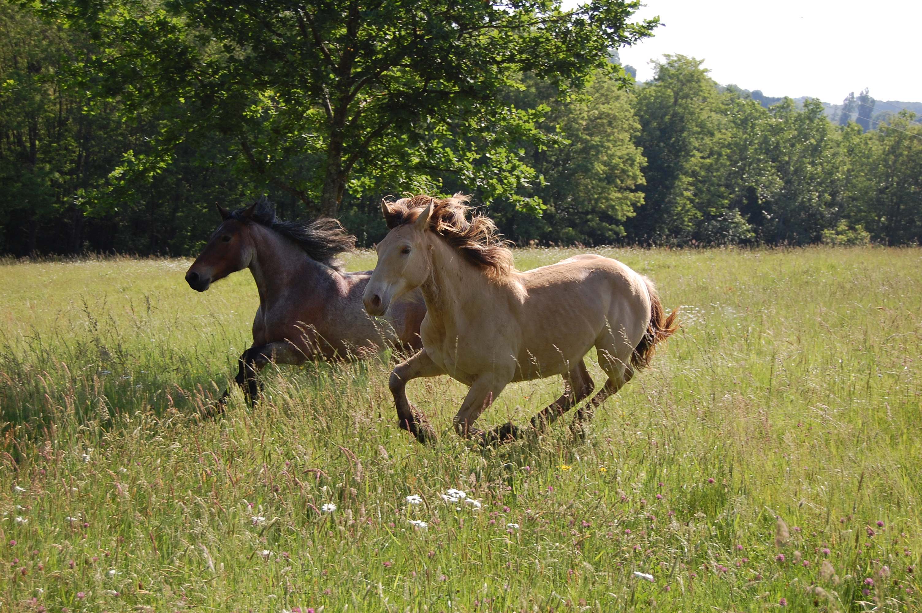 Histoire, equicoaching, galop.jpg