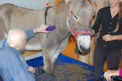 Les chevaux du sourire mediation animal