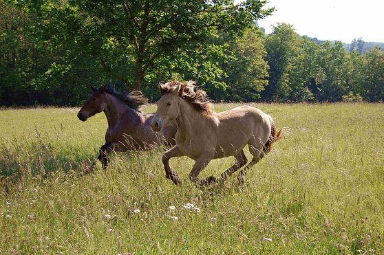 les-chevaux-du-sourire-mentions-legales-