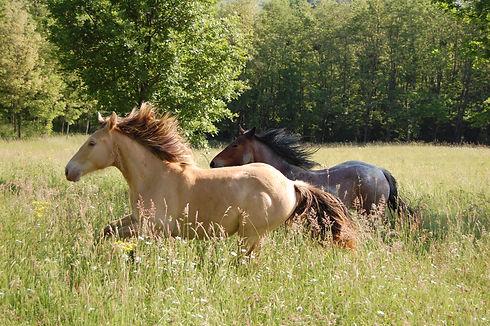 Histoire Coach Les chevaux du sourire Ma