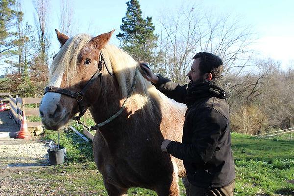 Les chevaux du sourire sud-ouest lot et