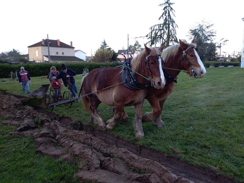 Les chevaux du sourire labour à la gravette ville de Marmande avec une paire de jument de trait comt