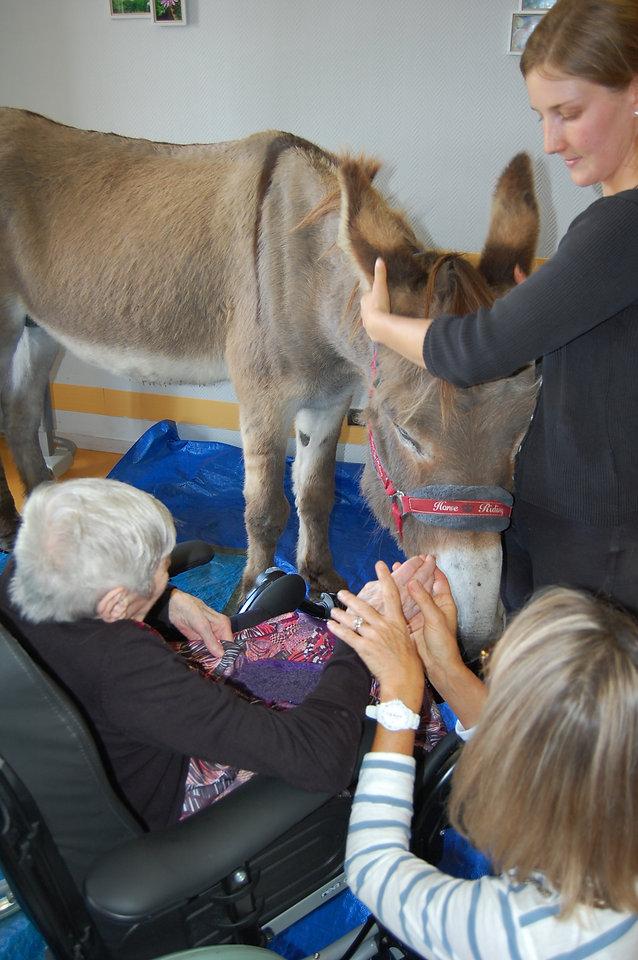 Les chevaux du sourire médiation animale ehpad de SOS lot et garonne proche casteljaloux.jpg