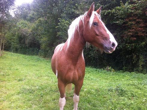 Balthazar coach les chevaux du sourire M