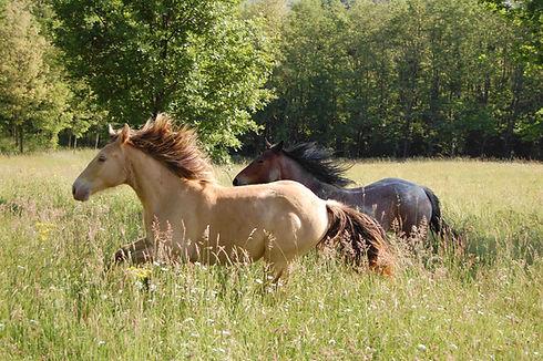 Les chevaux du sourire séjour bien être