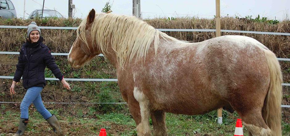 Les chevaux du sourire Seance equicoachi