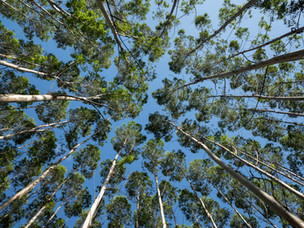 SA RESEARCHERS SHORTLISTED FOR INTERNATIONAL FORESTRY AWARD