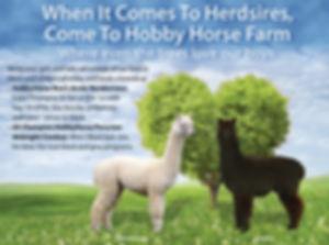 Hobby-Horse-herdsiretree-2020.jpg
