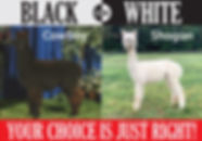 cowboy-shogun-homepage.jpg