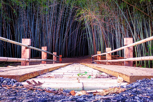 Bamboo Forest HDR - 10-3-2020 - 00085.jpg