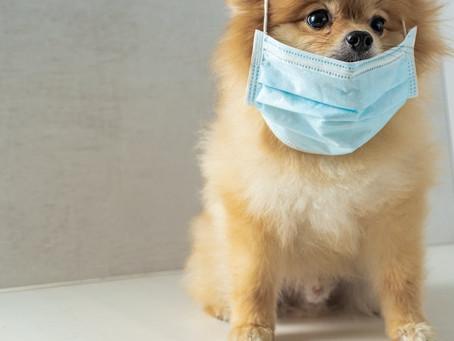 ¿Debo vacunar a mi mascota contra el COVID-19?