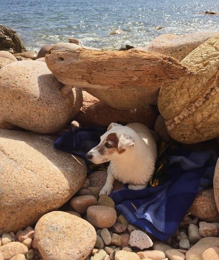¡A la playa!