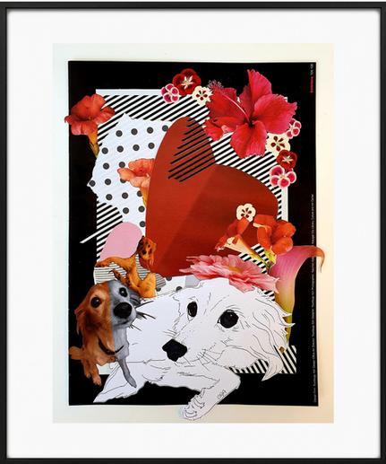 לכלבה האלמותית שלי שושי חיפושית מקסימוב הידועה בכינויה שושנית יחד עברנו 17.5 שנים של חברות עמוקה ואהבה  ללא תנאי 🤍