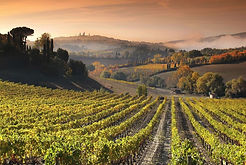 Toscana vigneti.jpg