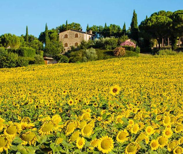 Umbria flower copia.jpg