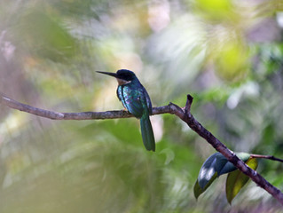 Chapada Diamantina birdlife