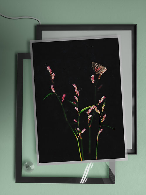 Flower blush and timid moth | Film Insert