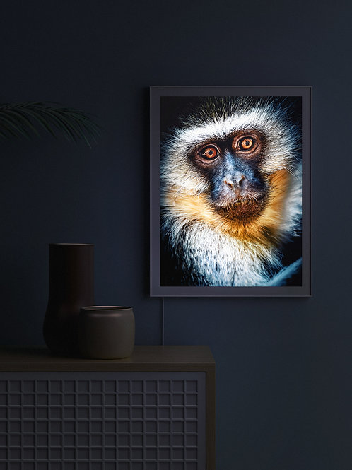 Vervet Monkey Portrait | Lightbox