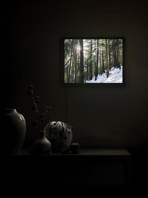 Morning Light | Lightbox