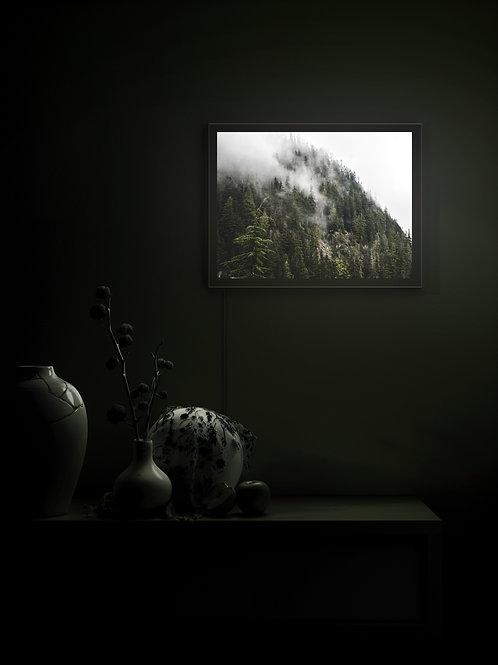 Mist and Shadow   Lightbox